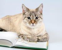 Cat reader Royalty Free Stock Photos
