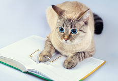 Cat reader Royalty Free Stock Images