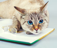 Cat reader Stock Images