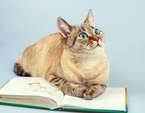 Cat reader Royalty Free Stock Photo