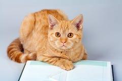 Cat reader Stock Photos