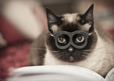 Cat reading. Cat with glasses reading a book in the bed Royalty Free Stock Photo