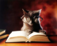Cat reading. Gray cat with glasses reading a book Royalty Free Stock Photo