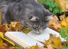 Cat reading a book Royalty Free Stock Photos