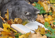 Cat reading a book stock photography