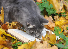 Cat reading book Stock Images