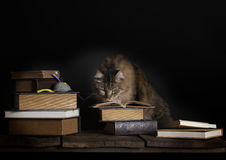 Cat Reading Book. A cat with intense plotting expression reading a book, additional books on old wood table, small toy mouse on one book Royalty Free Stock Image