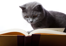 Cat reading a book stock images