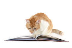 Cat reading a book on a white background Royalty Free Stock Image