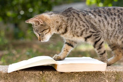 Cat 'reading' a book. Young cat looking at the book Stock Photos