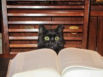 Cat reading. Cute cat reading a book Royalty Free Stock Photography