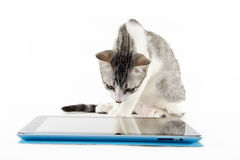 Cat reading a digital tablet. On a white background Stock Photography