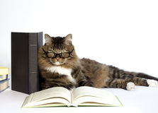 Cat with Reading Glasses. A brown tabby with green eyes peering over bifocal reading glasses while laying against a book with another book open in foreground Stock Photo