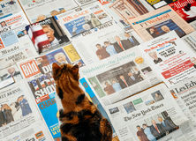 Cat reading major newspapers about Trum inauguration. PARIS, FRANCE - JAN 21, 2017: Cat admiring the covers of major international newspaper journalism featuring Stock Photography