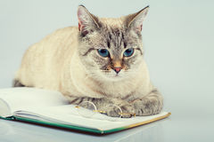 Cat reading notebook Royalty Free Stock Photo