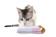 Cat reading a notebook on white background Royalty Free Stock Photo