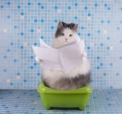 Cat reads the morning newspaper while sitting on the toilet Stock Images
