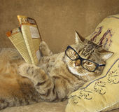 A cat reads a newspaper. Royalty Free Stock Images
