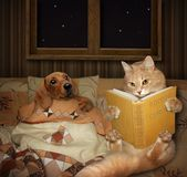 A cat reads tales. stock photo