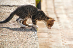 Cat ready to jump down. The cat is going to jump off the stone down stock photo