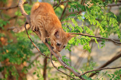 Cat ready to jump from tree Stock Images