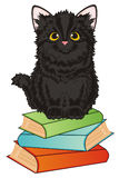 Cat ready to study Stock Photography