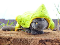 cat ready for the winter Royalty Free Stock Photo