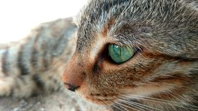 Cat. Real Cat eye Royalty Free Stock Photography