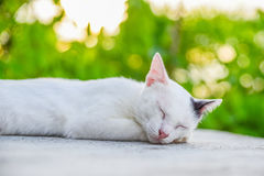 Cat reclined on floor Royalty Free Stock Image