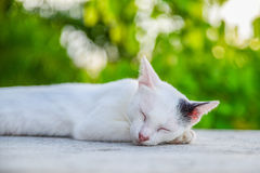Cat reclined on floor Stock Photo