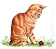 cat red 向量例证