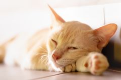 Cat and red alarm clock. royalty free stock image