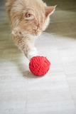Cat with red ball Stock Images