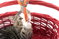 cat in red basket Royalty Free Stock Image