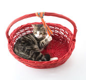 cat in red basket Royalty Free Stock Photo