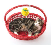 cat in red basket Royalty Free Stock Images