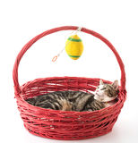 cat in red basket Stock Photos