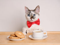 Cat in red bow tie drinking coffee with cookies. Cat in red bow tie drinking morning coffee with cookies Stock Images