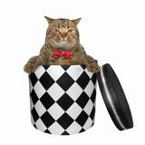 Cat gets out of the box. The cat in a red bow tie is getting out of the gift box. White background. Isolated royalty free stock photo