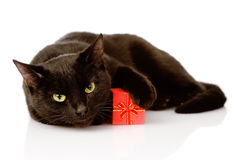 Cat with a red box. isolated on white background Stock Photography