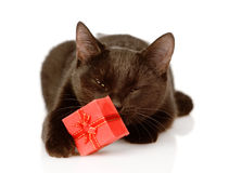 Cat with a red box.  on white background Stock Images