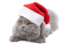 Cat in red cap isolated Royalty Free Stock Photos