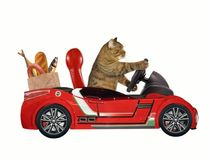 Cat in a red car 1. The cat in a red car carries food. White background royalty free stock photo