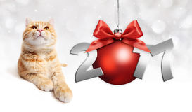 Cat and red christmas ball with red satin ribbon bow  Stock Image