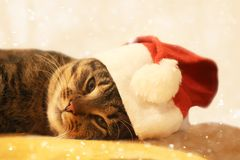 Cat in red Christmas hat. Stock Image