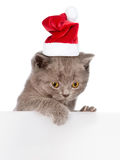 Cat in red christmas hat peeking from behind empty board. Space Stock Photo