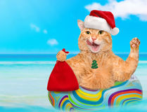 Cat in red Christmas hat relaxing on air mattress in the sea . Royalty Free Stock Images