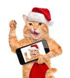 Cat in red Christmas hat taking a selfie together with a smartphone. Royalty Free Stock Photos