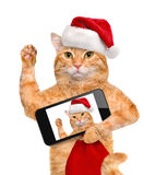 Cat in red Christmas hat taking a selfie together with a smartphone Royalty Free Stock Images