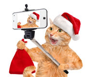Cat in red Christmas hat taking a selfie together with a smartphone. Royalty Free Stock Photo